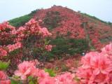 徳仙丈山(本吉側)
