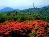 田束山のつつじ園