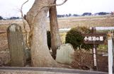 幾世、小佐治的墳墓