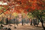 不動尊公園の桜・紅葉