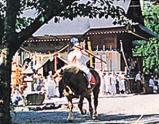 吉岡八幡神社流鏑馬(灌木叢鯊魚)