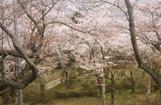 羽黒山公園(大崎市)
