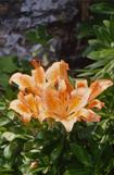 神割崎の植物