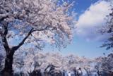 Omori Park★05444ah3330040922