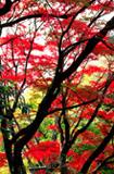 唐沢山の紅葉
