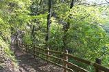 ふれあい森林浴コース