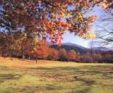 石川県樹木公園
