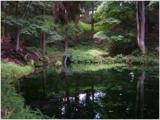 「信州の名水・秘水」 大沼の池の湧水
