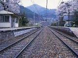 冠着駅の萩の花