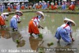 御田植祭(滋賀県多賀町)