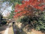 琵琶湖疏水沿いの紅葉