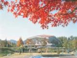 自然運動公園の紅葉