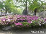 和歌山城のツツジ