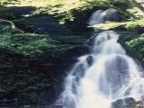 【2020年中止】調音の滝 滝開き