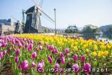 Huis Ten Bosch Tulip Festival★42202ba2212053934