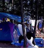 白浜海水浴場キャンプ場