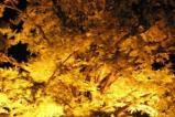 下城の大イチョウライトアップ